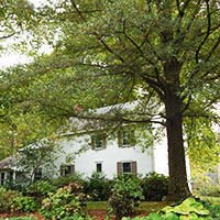 Tree Services Bucks County Montgomery County PA