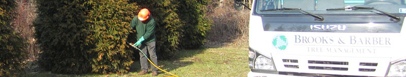 Tree Fertilization Shrub Fertilization Bucks County Montgomery County